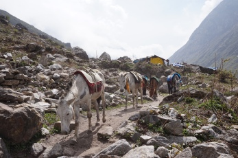Mules are used for transporting goods to the villages in the Langtang Valley.