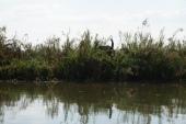 Elephant waiving