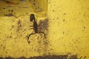 Mr. Scorpion