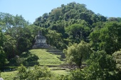 Temple in the jungle, Palenque